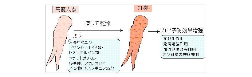 高麗人参【紅参】について